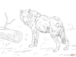 euroasian wolf coloring page free printable coloring pages