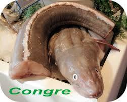 comment cuisiner du congre cuisiner du congre 100 images tagine de congre au four cuisine