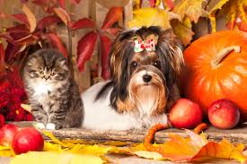 pet safety tips for thanksgiving vshsd