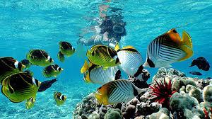 Kentucky snorkeling images Guide to snorkeling in hawaii spots tours rentals jpg
