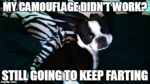 Boston Terrier Meme - image tagged in boston terrier fart imgflip