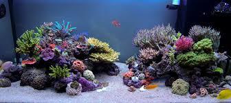 Floating Aquascape Reef2reef Saltwater And Reef Aquarium Forum - 80 gallon 48