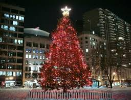 boston s tree begins its journey travelandtourworld