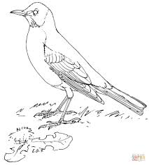 american robin coloring page free printable coloring pages