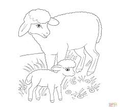 sheep mother lamb coloring free printable coloring pages