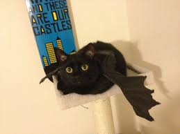 Toothless Dragon Halloween Costume 10 Black Cats Toothless Disguise Toothless
