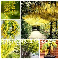 Yellow Climbing Flowers - yellow climbing promotion shop for promotional yellow climbing on