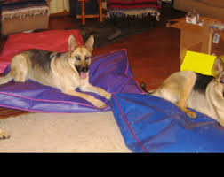 Tough Dog Bed Tough Dog Beds Perfect For Diggers Very Easy To Clean