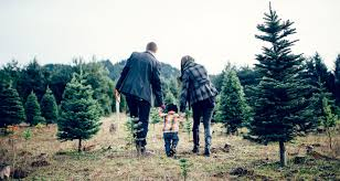10 best christmas tree farms fun christmas tree farms to visit