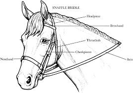 horse coloring pages gekimoe u2022 62975