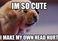 Puppy Face Meme - inspirational funny puppy memes funny dog face with meme kayak