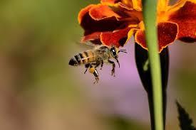 native ohio plants get the buzz on native ohio plants and pollinators mentor public