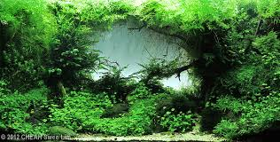 Aga Aquascape Get Excited And Make Something Page 15 Aquascaping World Forum