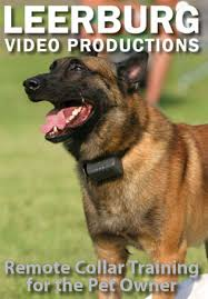 belgian shepherd training video remote collar training for the pet owner