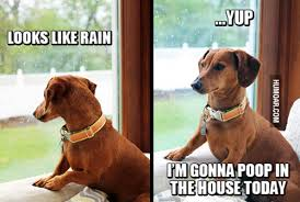 Dog Poop Meme - dog i m gonna poop in the house today humoar com