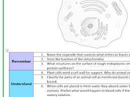 animal cell structure and function worksheet bloom u0027s taxonomy by