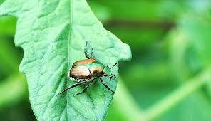 Garden Pests Identification - 13 headache inducing garden pests and how to control them hobby