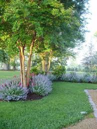 Southern Garden Ideas Catmint And Crepe Myrtle I Crepe Myrtle A Southern Delight