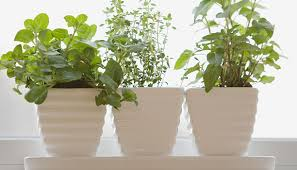Window Sill Herb Garden Designs Creative Of Window Sill Herbs Designs With Growing An Herb Garden