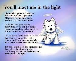in memory of in memory of a pet pictures photos and images for