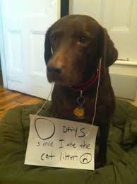 Dog Shaming Meme - dog shaming meme dog funnies dog and meme