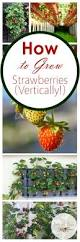 103 best vertical gardening images on pinterest vertical gardens