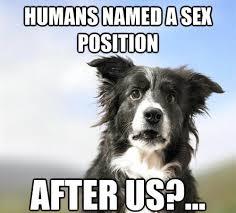 Sex Position Memes - 25 funny dog memes part 4 dogtime