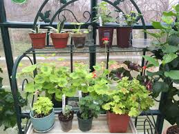 The Summer And Winter Garden - julie zickefoose on blogspot stretchy beauty