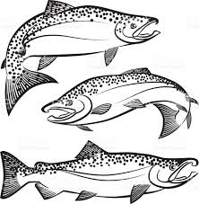 salmon swimming clip art vector images u0026 illustrations istock