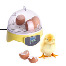 small chicken egg incubators reviews online shopping small