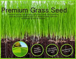 new garden guru 2kg highest quality grass seed our lawn seed