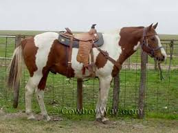 recognize horse colors page 2