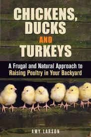 cheap raising ducks for eggs find raising ducks for eggs deals on