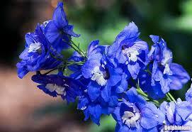 blue and purple flowers purple flowers 25 pretty small purple flower plants