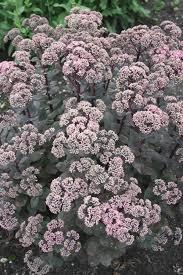 565 best 2016 pdn summer flowering plants images on pinterest