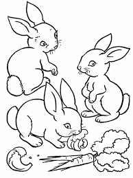 realistic rabbit coloring page