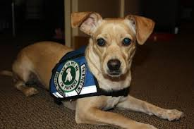 Window Seats For Dogs - tips for flying in the u s with a service dog wanderwisdom