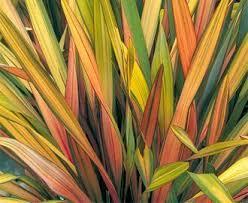 best 25 ornamental grass landscape ideas on