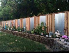 Backyard Privacy Screens by They Grow 3 U0027 A Year And Are For Privacy But Don U0027t Take Up As Much