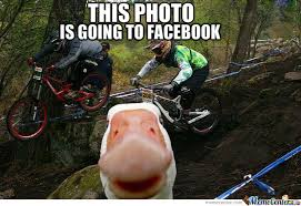 Goose Meme - self photography goose by jim ivanov meme center