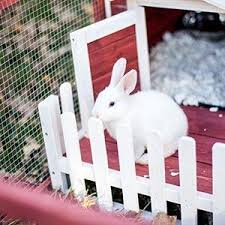Rabbit Hutch For 4 Rabbits Amazon Com Advantek The White Picket Fence Rabbit Hutch Garden
