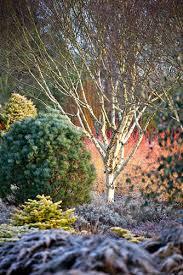 bressingham in mid winter gap gardens blog