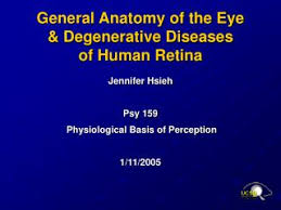 Anatomy Of Human Eye Ppt Ppt Introduction To Human Diseases Powerpoint Presentation Id
