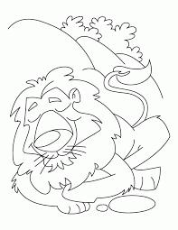 coloring lion coloring