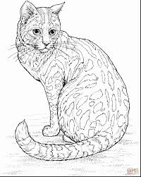 astonishing leopard coloring pages printable with videos of cats