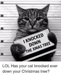 Cat Christmas Tree Meme - 55 50 45 40 i knocked down the xmas tree 5 lol has your cat knocked