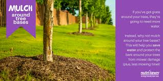 nutri lawn on tiptuesday use mulch around tree bases