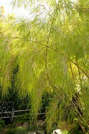 bamboo land nursery and parklands 65 best planting images on pinterest gardens planting and garden