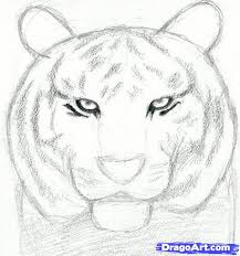 how to draw a tiger head step by step realistic drawing