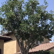 higuera tree care 62 photos 175 reviews tree services e